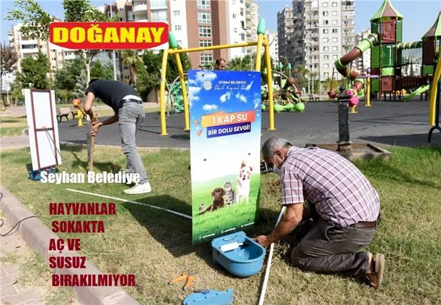 """Başkan Akay """"Sokak hayvanlarına"""